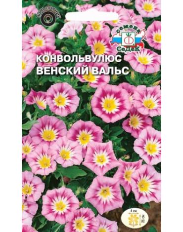 Конвольвулюс Венский вальс (Седек)