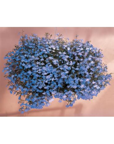 Лобелия Сапфир ампельная синяя (Сотка)