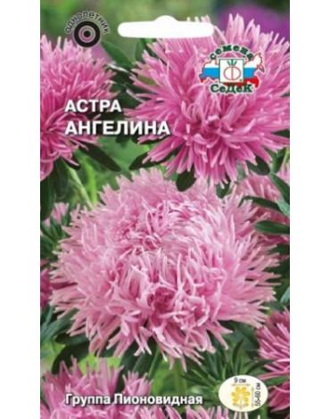 Астра Ангелина пионовидная,розовая (Седек)