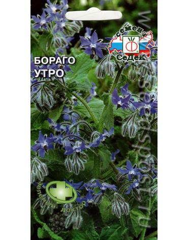 Бораго (огуречная трава) Утро (Седек)