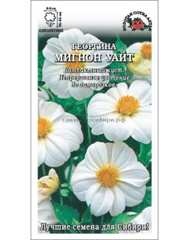 Георгина Мигнон Уайт (Сотка)