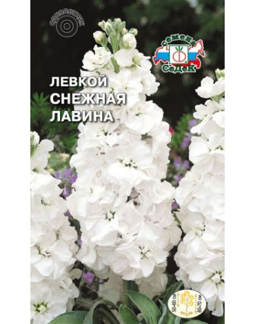Левкой (маттиола) Снежная лавина белый (Седек)