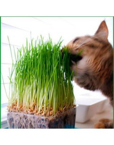 Трава для кошек Мяу-мяу (Сотка) б/п