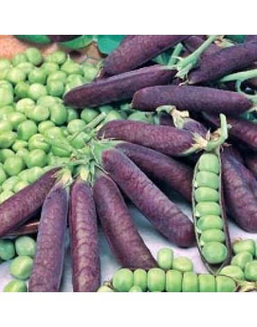 Горох Дезира фиолетовый (Сотка)