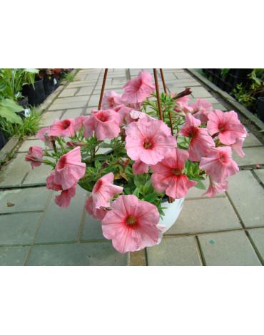 Кашпо с цветами (Л.А) 700руб