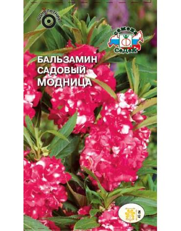 Бальзамин Модница (Седек)