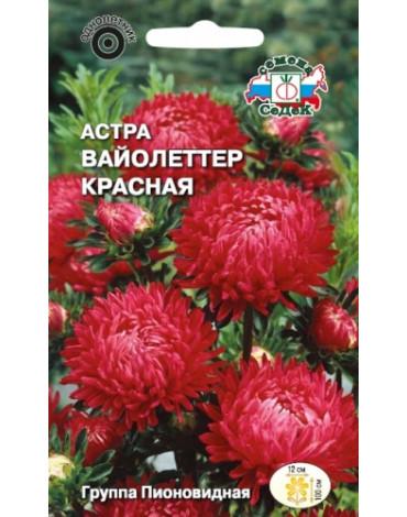 Астра Вайолеттер красная (Седек)