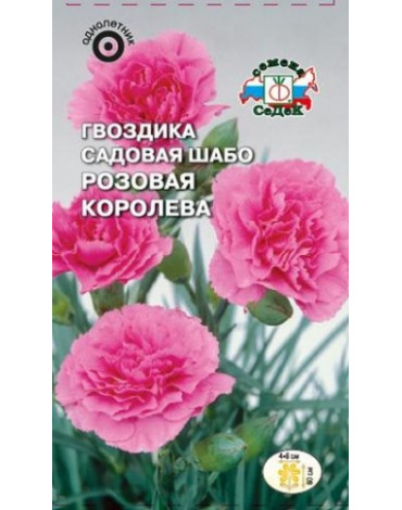 Гвоздика Розовая королева шабо (Седек)