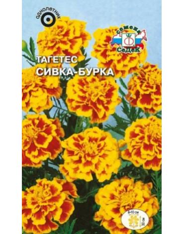 Тагетес Сивка - Бурка отклонённый (Седек)