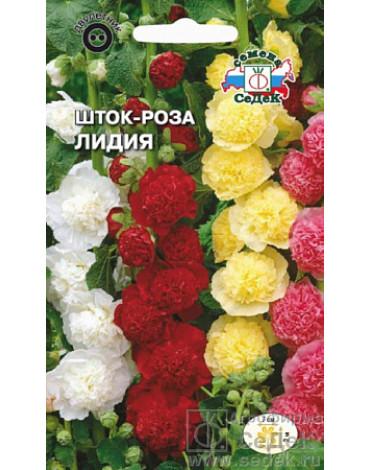 Шток - роза Лидия (Седек)