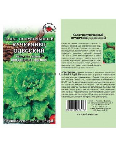 Салат Кучерявец Одесский (кочан) (Сотка) б/п