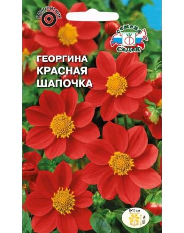 Георгина Красная шапочка (Седек)