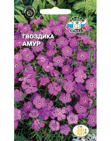 Гвоздика Амур амурская (Седек)