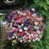 Кашпо с цветами 500руб